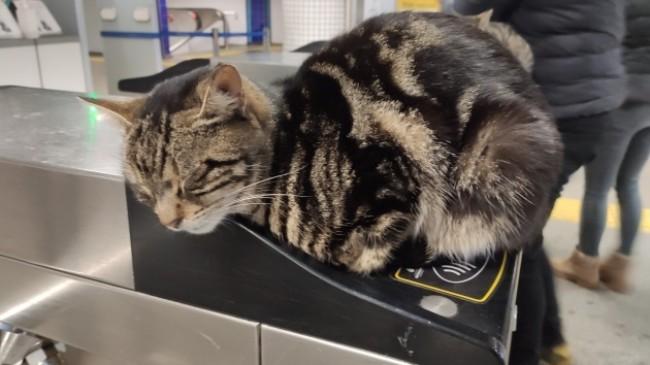 Soğuktan etkilenen kediler akbil turnikelerinde ısındı
