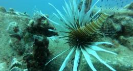 Akdeniz, tropik türlerin işgali altında