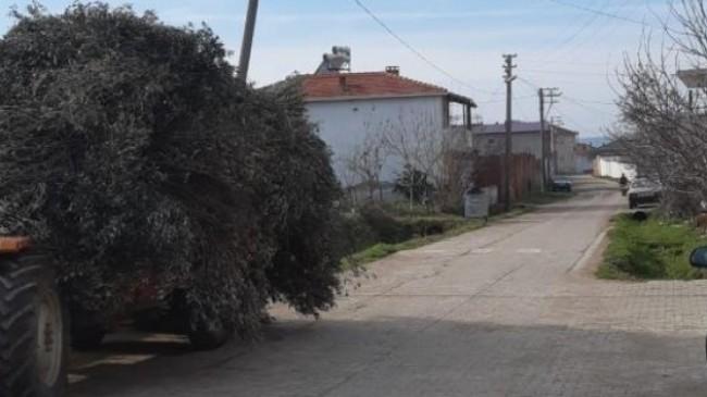 Burhaniye'de bir mahalleye kısmi karantina