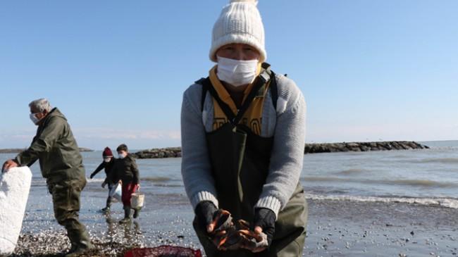 Dalgaların kıyıya attığı salyangozlar kadınlara ekmek kapısı oldu