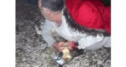 Jandarmanın dikkati sayesinde köpeğin saldırısına uğrayan adamı kurtuldu