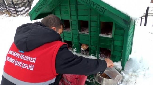 Sancaktepe Belediyesi karlı havada minik dostları unutmadı