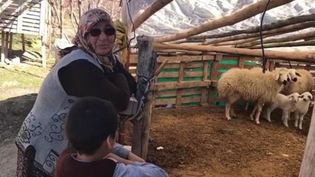 Şehit annesinin koyunlarını çaldılar!