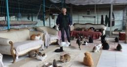Yok böyle bir ev…Tam 250 kediye ev sahipliği yapıyor