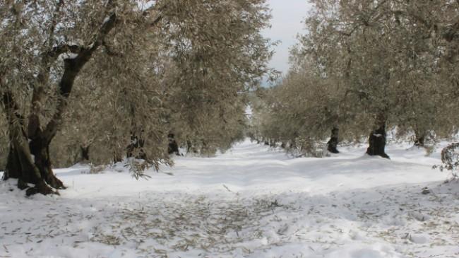 """Zeytinleri ağaçları yanan köylüler: """"Destek olunmazsa aç kalırız"""""""