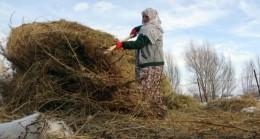 70 yaşındaki Safiye Nine, 10 kişinin yapamadığı işi tek başına yapıyor