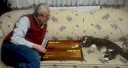 Kedinin tavla merakı