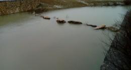 Uzunova göleti son yağışlarla doldu