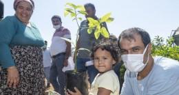 Büyükşehir'in Avokado Fidanı Dağıtım Projesi Genişliyor